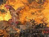 اندلاع حريق بمزرعة دواجن وكرفونات بالمنطقة الصناعية بالمحلة | صوت مصر نيوز