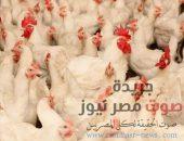 تعرف علي أسعار الدواجن اليوم الأثنين 2-7-2018 بالأسواق المصرية | صوت مصر نيوز