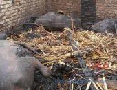 إندلاع حريق هائل بمزرعه مواشي بمركز سنورس يتسبب فى نفوق 82 رأس ماشية | صوت مصر نيوز