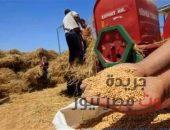 وزير الزراعة يعلن بداية موسم حصاد محصول القمح   صوت مصر نيوز