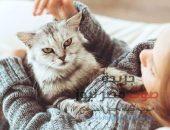 أحذر من تربية القطط لهذه الأسباب | صوت مصر نيوز