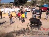 واقعة مأساوية .. عجل يقتل جزار ويصيب 9 آخرين أثناء ذبحه   صوت مصر نيوز