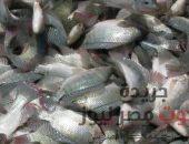 ضبط 3 طن أسماك فاسده داخل ثلاجة بالقليوبية | صوت مصر نيوز