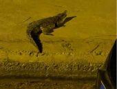 """رعب بين أهالي أكتوبر بعد عثورهم على """"تمساح في الشارع""""   صوت مصر نيوز"""