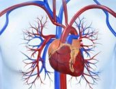 هل القلب مسئول عن التفكير أو الإحساس؟   صوت مصر نيوز